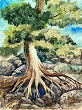 Watercolor painting by Colette Pitcher of a tree growing out of rocks