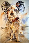 Watercolor painting of a cute dog by Colette Pitcher.