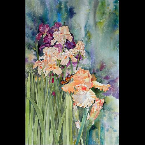 Monarch Iris