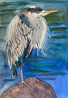 Great Blue Heron watercolor painting by Colette Pitcher
