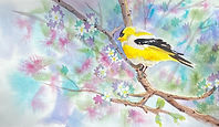 Goldfinch watercolor by Colette Pitcher