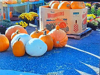 Reference photo of pumpkins