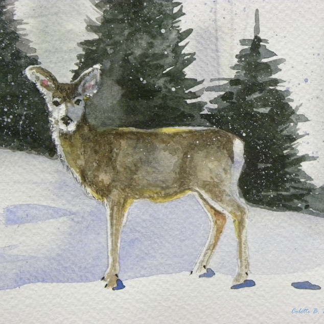 Snow deer 8x11.jpg