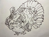 turkey drawing by Colette Pitcher