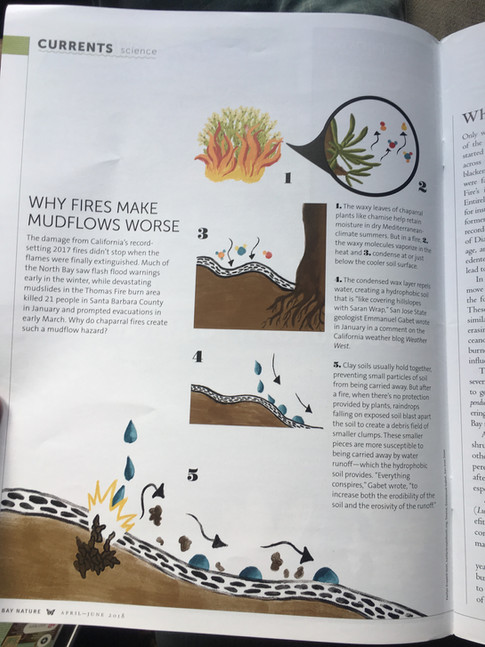 Fire/erosion infographic for Bay Nature Magazine
