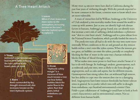 Tree Embolisms - Bay Nature Magazine