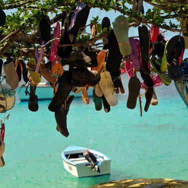 """""""Schuhbaum"""", Insel Bonaire, Karibik"""