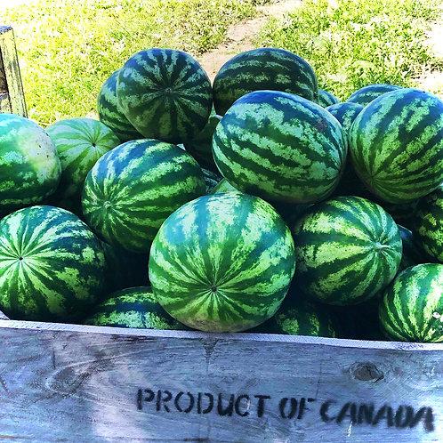 Watermelon Seedless (Minis) /EA