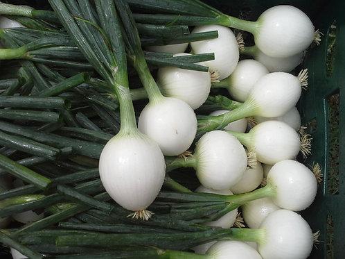 Onions White/EA