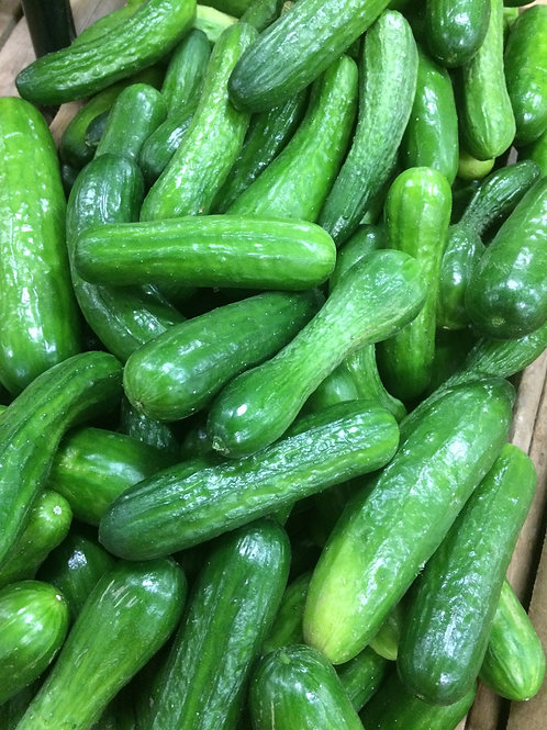 Cucumber Mini/LB