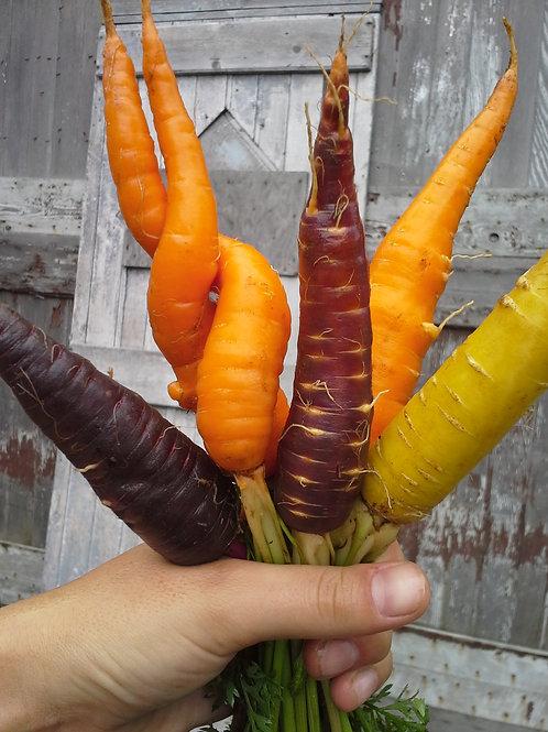 Carrots Rainbow/Lb (aprox 2Lb bag)