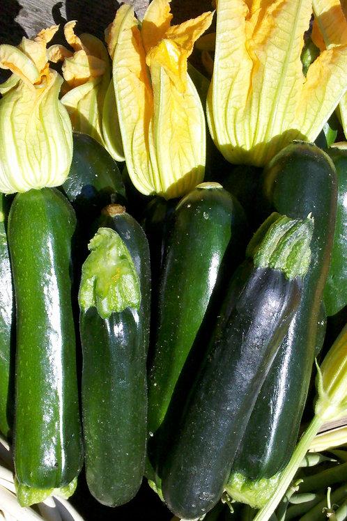 Zucchini Green/LB