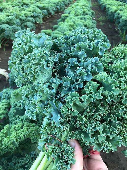 Kale Green/EA