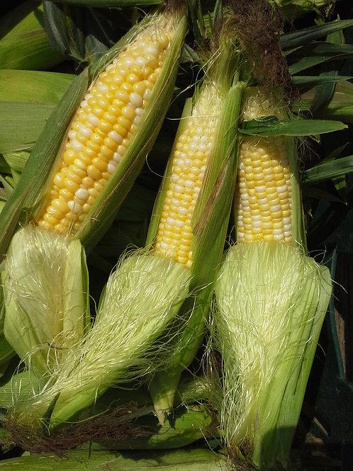 Corn Sweet NON GMO/EA