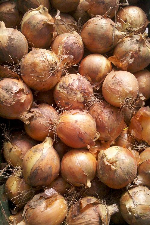 Onions Yellow (Spanich)/LB