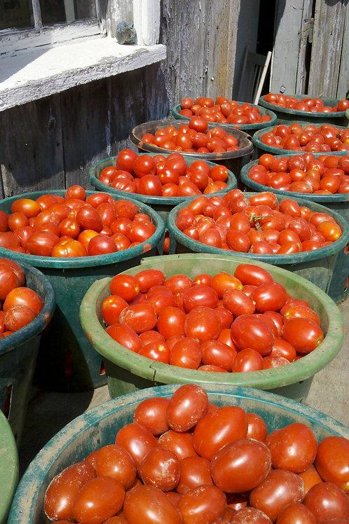 Tomatoes Roma - LB