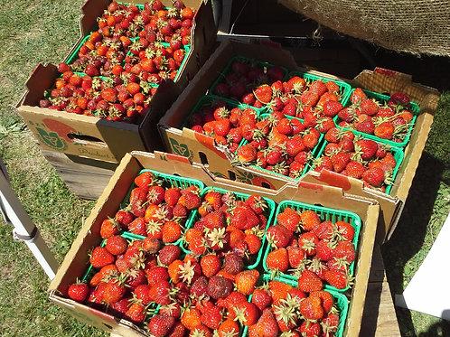 Strawberries Flat