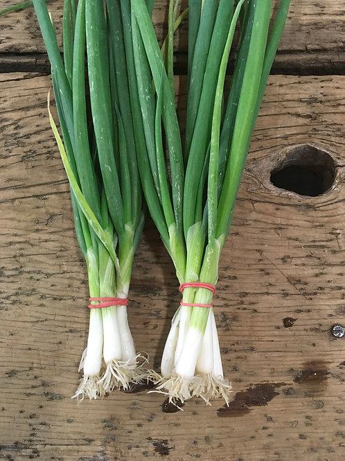 Onions Green/EA
