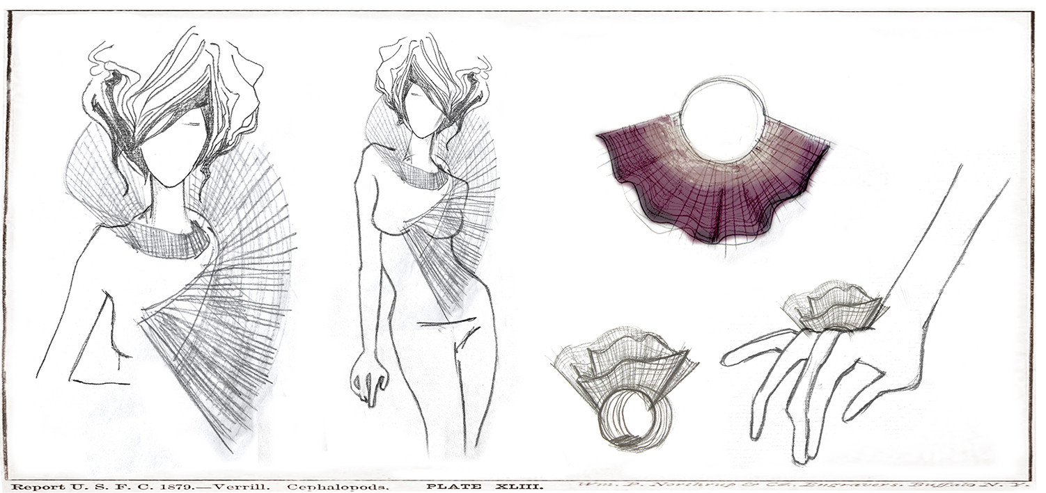 Collection's Sketchbook