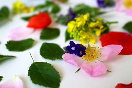 Les 38 quintessences florales du Dr Bach