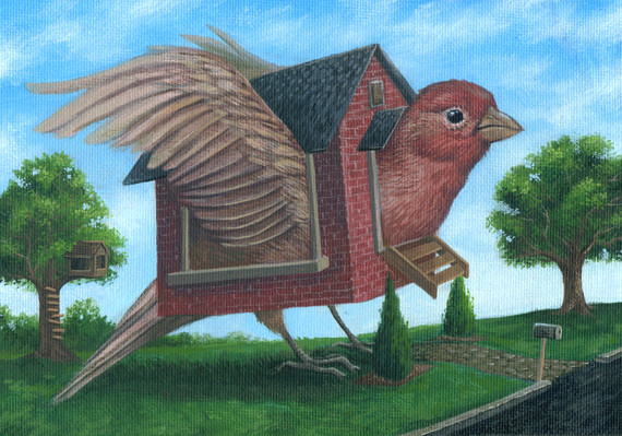 The House Finch