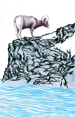 mountain goat unframed.jpg
