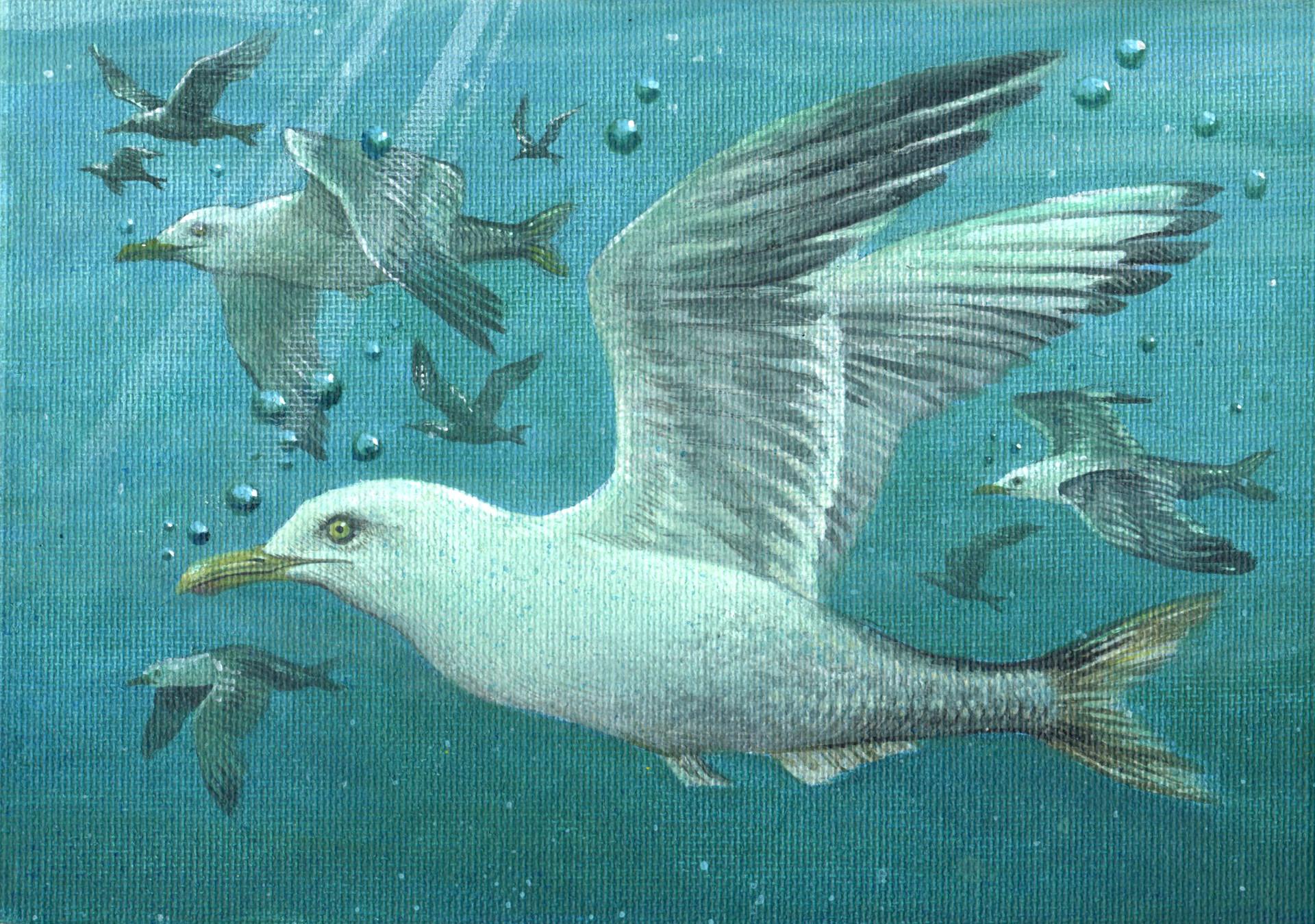 The Herring Gull