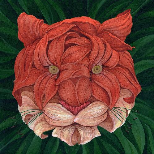 Tiger Lily Tiger