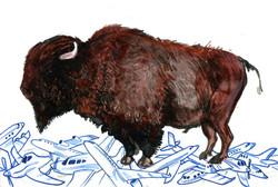 Buffalo unframed.jpg