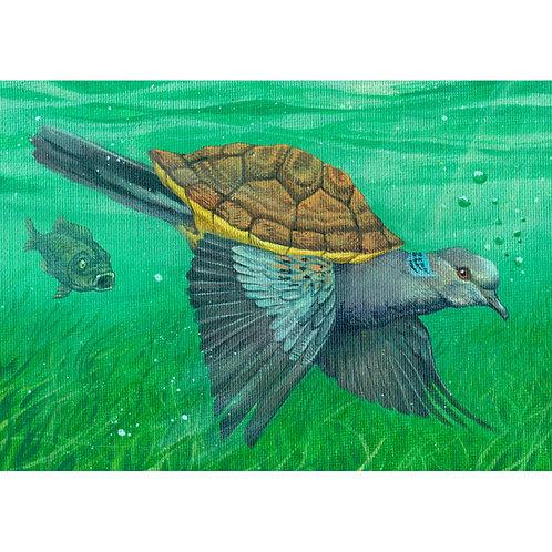 Turtle Dove (framed)