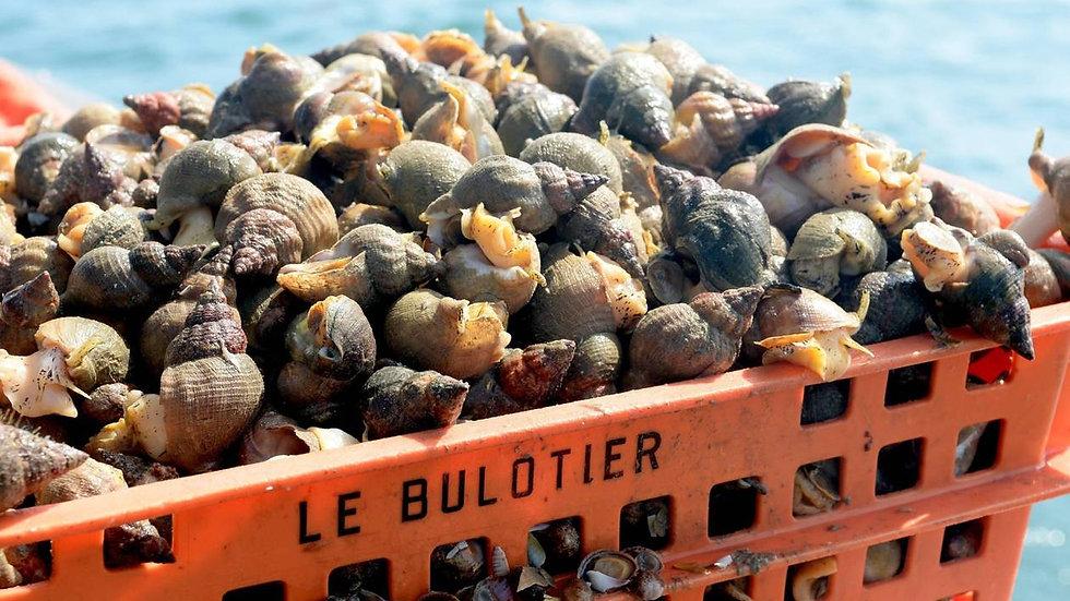 """Bulots """"Premium"""" IGP Baie de Granville (1KG)"""