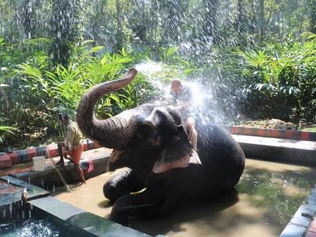 My Latest Column in Al.com on India
