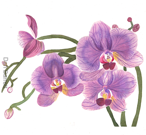 Orchids%252520In%252520Violet%252520Wix_