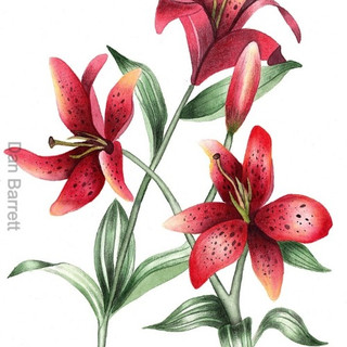 Lillies In Red