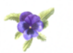 Pansy.png