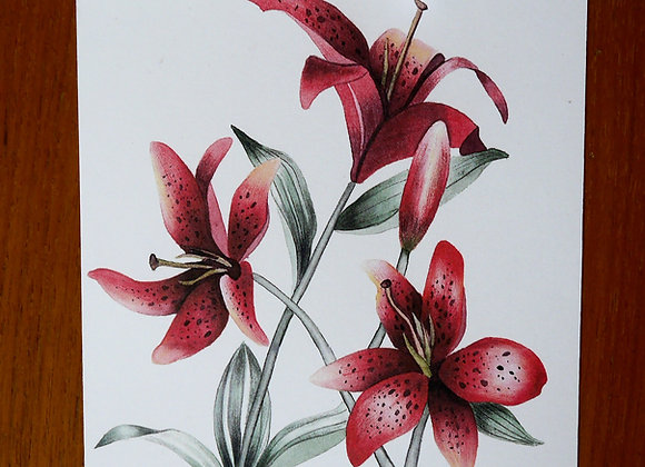 Lilies In Red Art Print