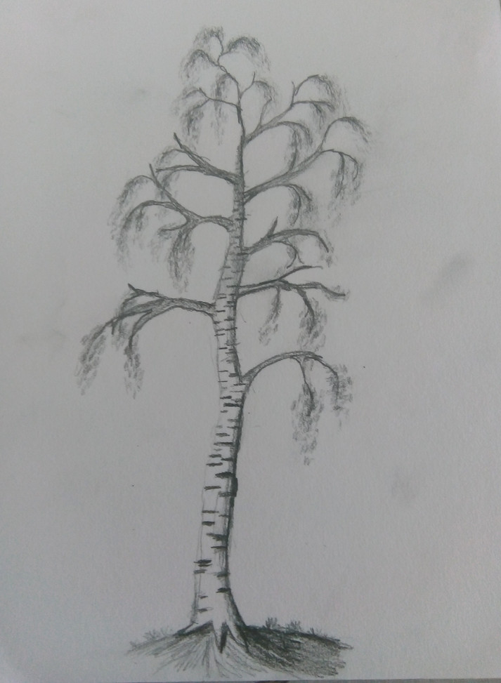 Art Club Tree Drawing 2