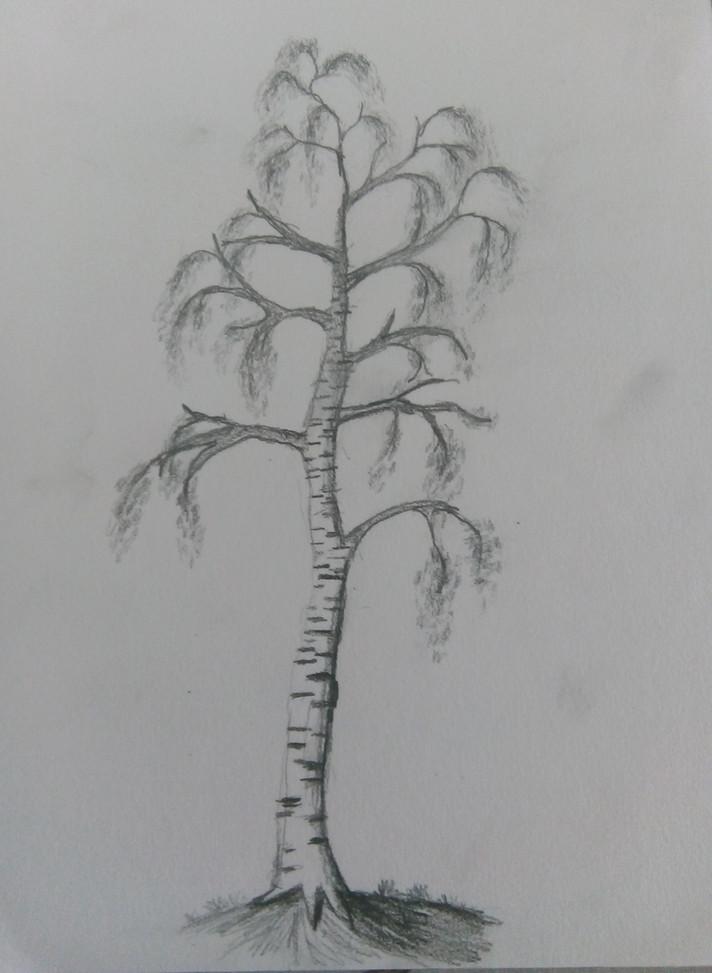Art Club Tree Drawing 2