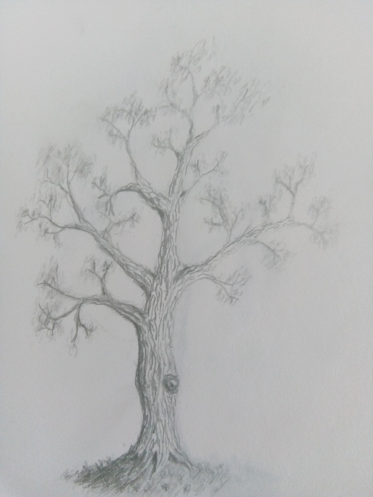 Art Club Tree Drawing 1