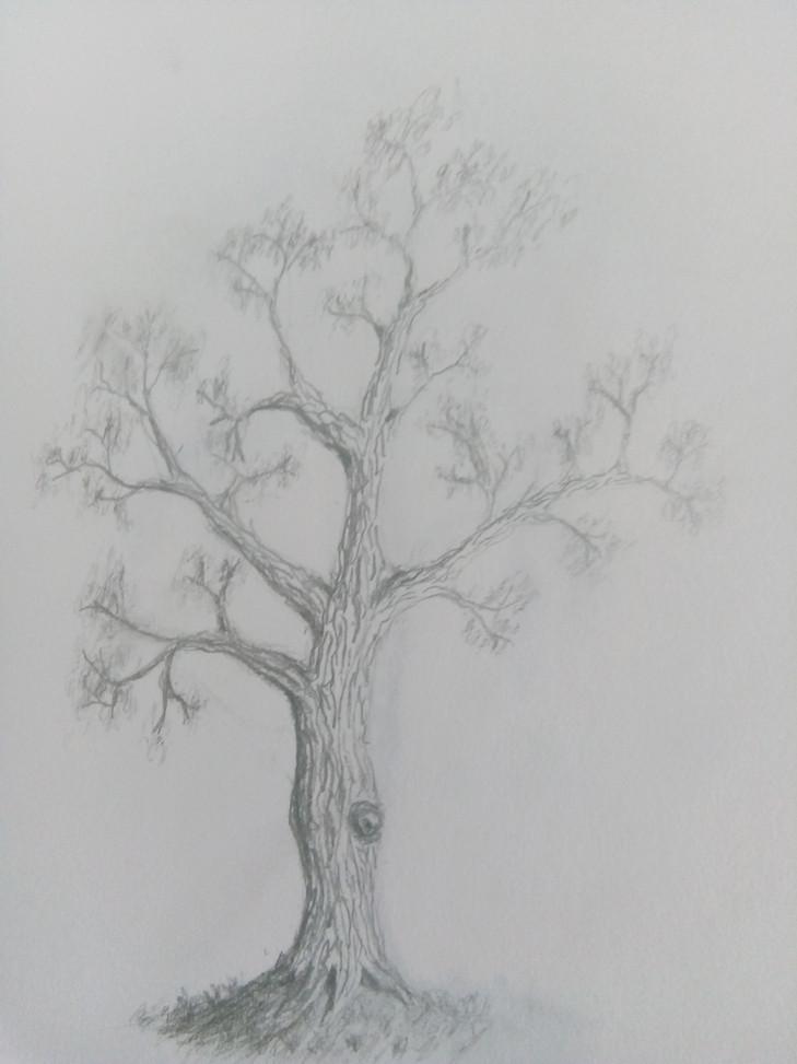 Art Club Tree Drawing 1