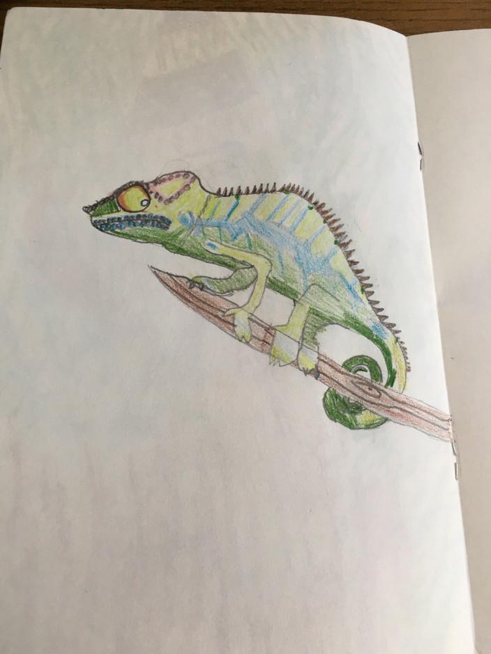 Harry B Sketchbook
