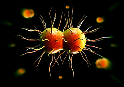 Gonorrhoea.png