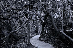 haunted_forest_Large_-1.jpg