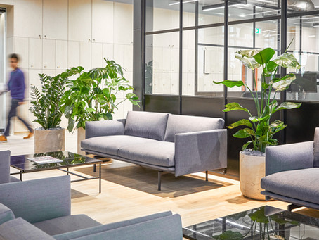 Tips for Bringing Plants into the Workspace