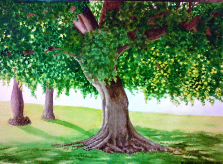 fig tree in a park