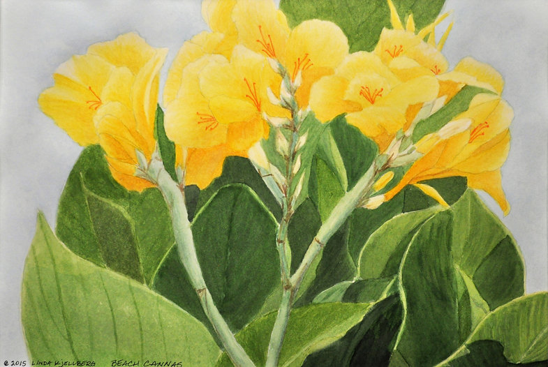 Yellow cannas with green leaves.
