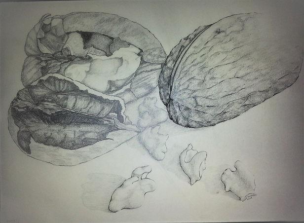 walnuts pencil drawing