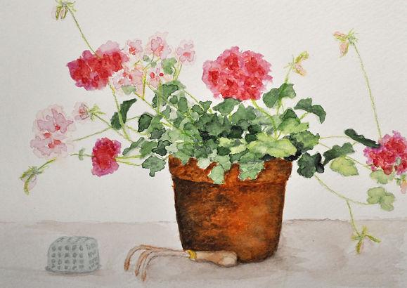 geranium on a bench