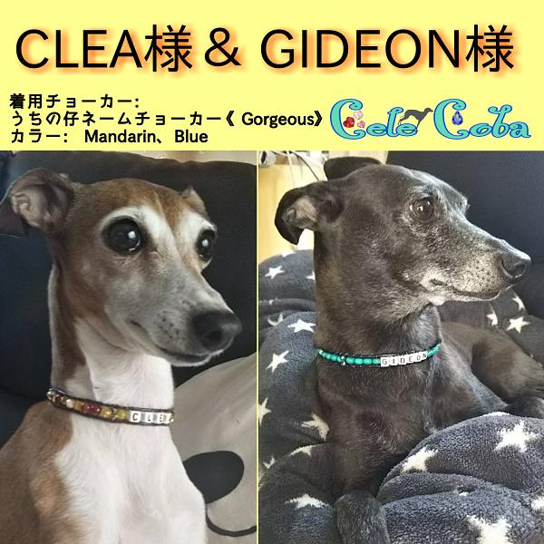 CLEA様 & GIDEON様