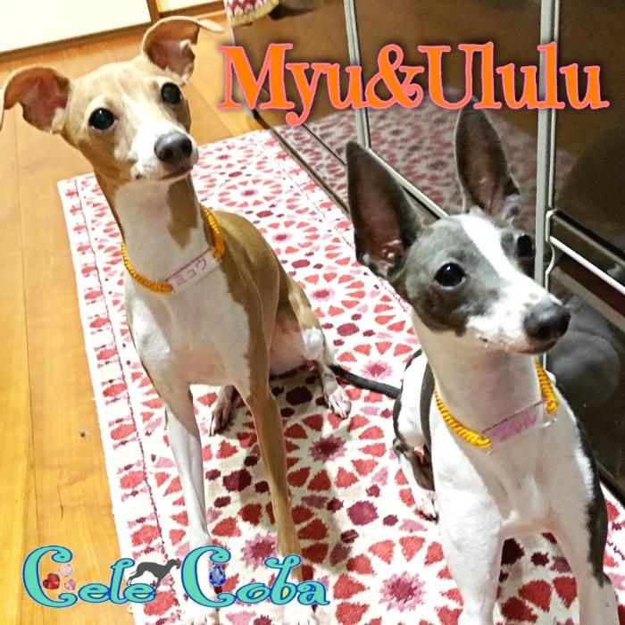 MYU&ULULU